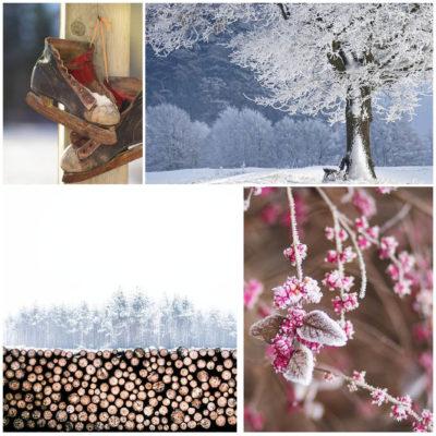 Wintergerichte MWalter Sehen – Staunen – Schmecken